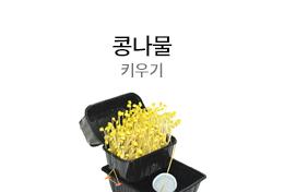 콩나물 키우기
